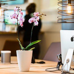 Bloeiende Toekomst orchidee